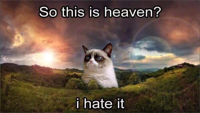 Social Media Says Farewell To Grumpy Cat – The Face That Launched A Million Memes