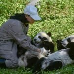 PANDAS! World's First Set Of Twins Born To Wild Dad & Captive Mom Enjoy Bamboo At 10 Months